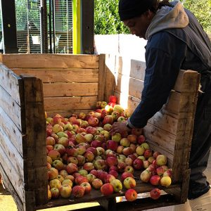 Trade Cider, Big Bear Cider Mill